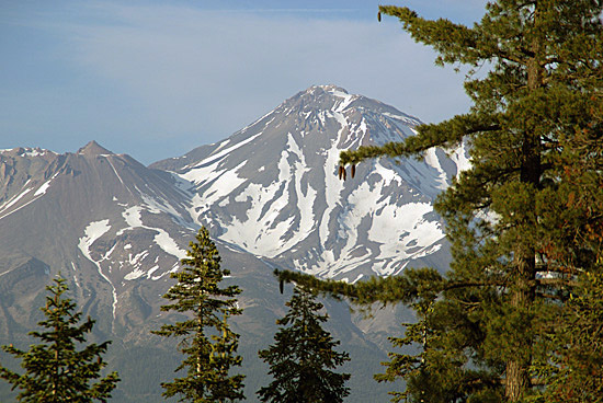 14,179-foot-high Mount Shasta and a sugar pine from near my campsite above the Middle Fork of the Sacramento River.