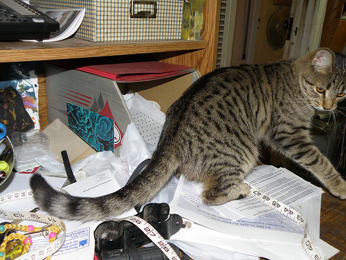 Don't let your messy writer's desk attract malicious felines. (Photo by Michael Cote)
